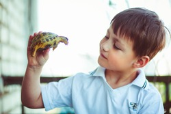 Small turtle in the hands of the lovely boy