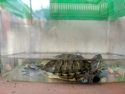 small turtle swimming half submerged in a cage filled with water