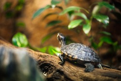 Small turtles in terrarium, turtle family on wooden log