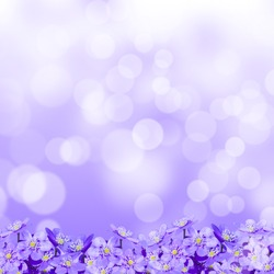 small violet flowers on a purple background