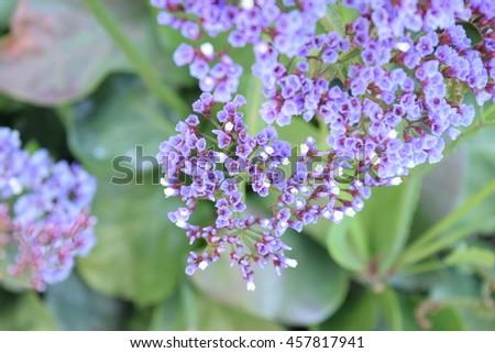 Free Photos Little Purple Flowers On Green Background Avopix