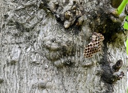 Small wasp's nest with wasps on a large tree with nature background.