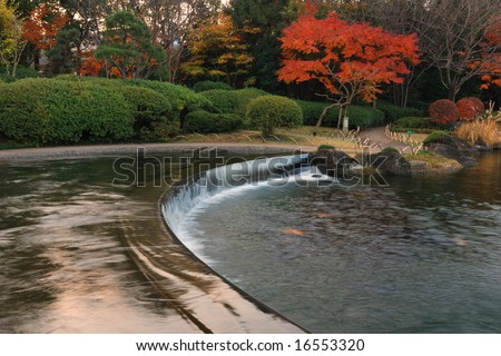 small waterfall and autumnal japanese maple tree in scenic japanese park