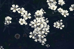 small white decorative flowers