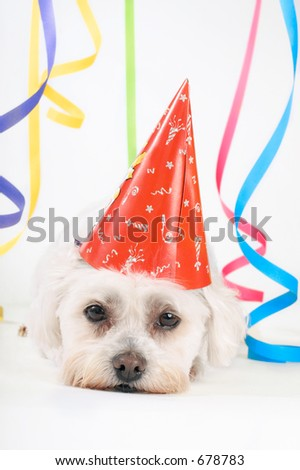 Small white dog with a party hat amongst colourful streamers.