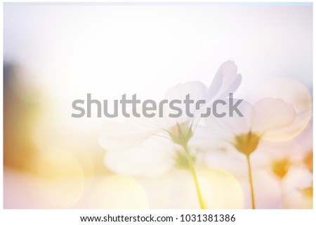 small white flower blooming in the morning sun.selective focus.