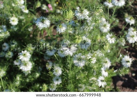 Small white flowers blossomed in the spring these are beautiful small white flowers blossomed in the spring these are beautiful white fluffy flowers that grow mightylinksfo