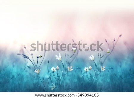 Small white flowers on a toned on gentle soft blue and pink background outdoors close-up macro . Spring summer border  template floral background. Light air delicate artistic image, free space