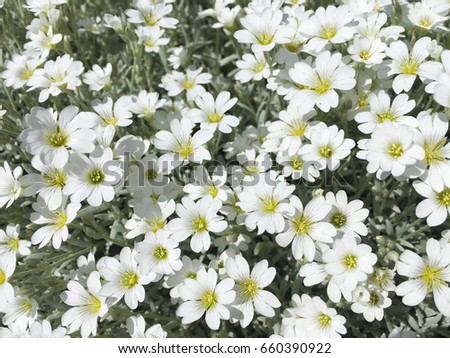 Small white flowers spring white flowers small white decorative small white flowers spring white flowers small white decorative flowers pretty white flowers mightylinksfo