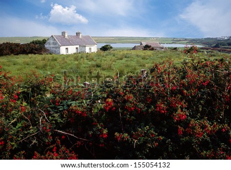 Small white house in Ireland countryside and view of green fields and red flowers, Europe