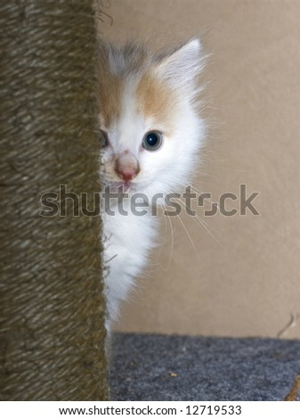 Small white kitten hiding behind scratching pole