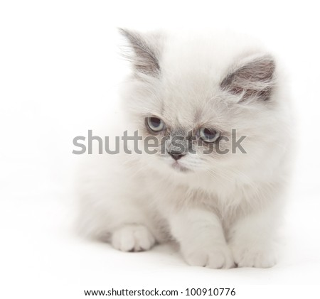 Small white kitten looks down attentively