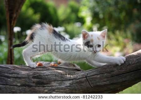 Small white kitten scratching tree branch