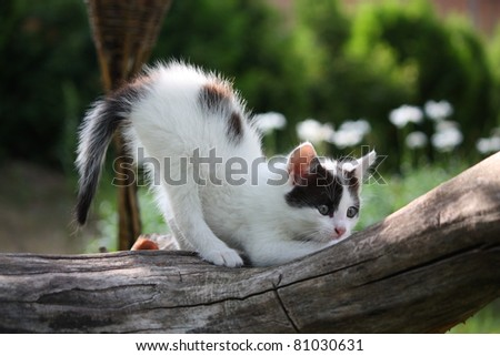 Small white kitten with black spots scratching nails on tree