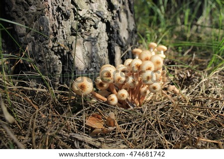 Small white mushrooms in the forest #474681742
