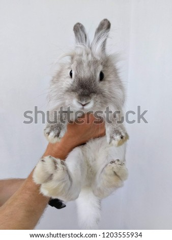Small white rabbit in the hands. Happy little cute fluffy bunny. Decorative Bunny. Man is holding a cute little rabbit #1203555934