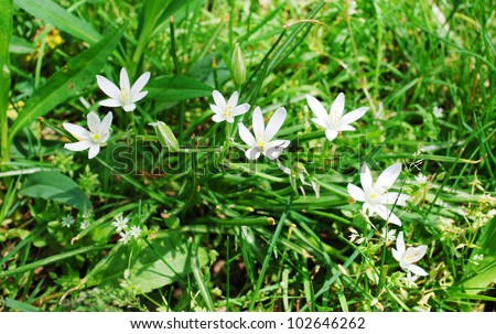 Small White Spring Flowers In The Grass Stock Images Page Everypixel