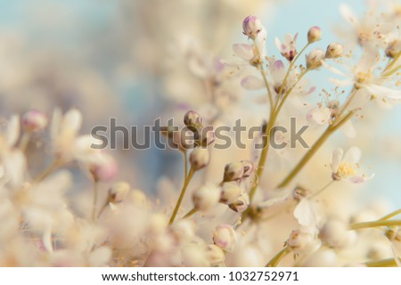 Small white summer flowers on a soft background. Unfocused abstract floral background #1032752971