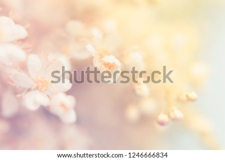 Small white summer flowers on a soft background. Unfocused abstract floral background #1246666834