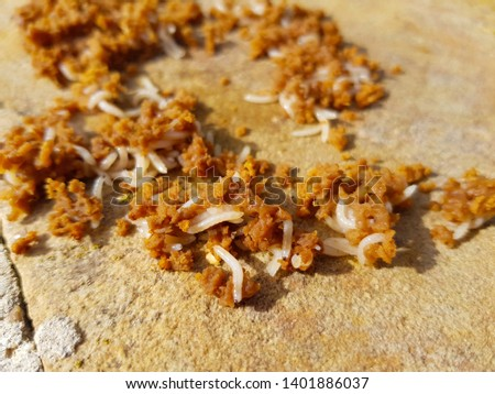 small white worms eating brown matter in decomposition.