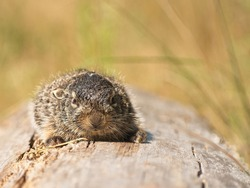 Small wild hare on a sunny day, lying on a log, in the wild, close-up. Front view of a baby hare.