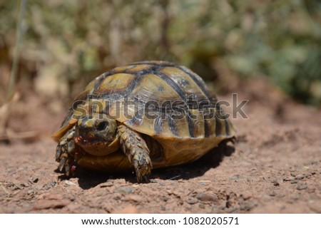 Small wild turtles #1082020571