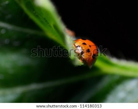 Small world of ladybug