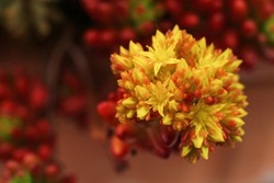 Small yellow and orange flower on a red background.