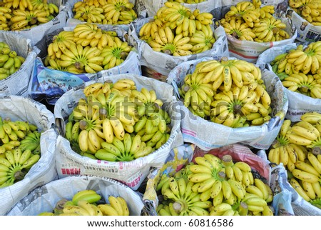 Small yellow bananas at Thai market