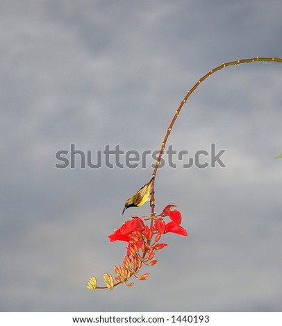 small yellow bird with cooked bead on red flowers as back ground