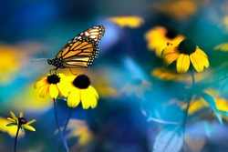Small yellow bright summer flowers and Nonarch butterfly on a background of blue and green foliage in a fairy garden. Macro artistic image.