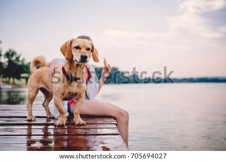 Small yellow dog standing on the dock with little girl