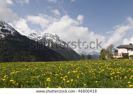 stock-photo-small-yellow-flower-field-with-snow-mountain-background-and-blue-sky-46800418.jpg