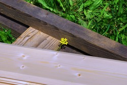 small yellow flower near the wooden stairs, in the garden