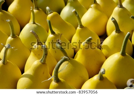Small yellow pear-shaped gourds close-up background