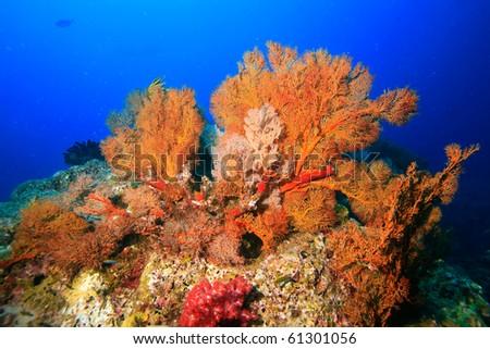 Small yellow seafan - stock photo