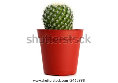 Smalll cactus isolated over white background