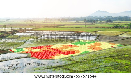 Smart agriculture , farm , precision farming concept. NIR images used to create field health maps using the normalize difference vegetation index in field rice. #657671644