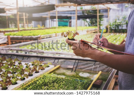 Smart agriculture technology concept - Farmer monitoring organic hydroponic red oak in plant nursery farm. Smart agriculture technology.