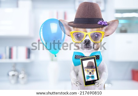 Smart beautiful dog chihuahua photographed themselves on the phone. Funny animals. Fashionable dog dressed in beautiful clothes. Hipster dog
