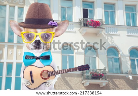 Smart beautiful dog chihuahua with a guitar. Funny animals. Fashionable dog dressed in beautiful clothes. Romantic song for lovers