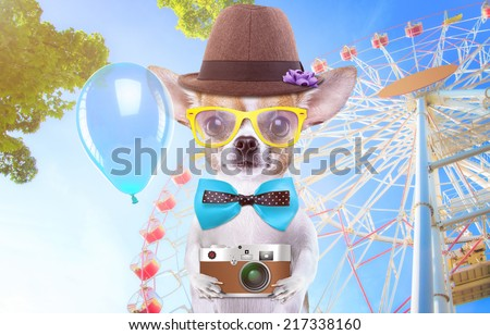 Smart beautiful dog chihuahua with a photocamera. Funny animals. Fashionable dog dressed in beautiful clothes. Hipster dog. Festive walk