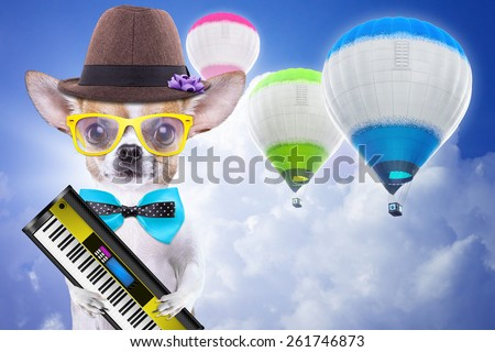Smart beautiful dog chihuahua with piano. Funny animals. Fashionable dog dressed in beautiful clothes