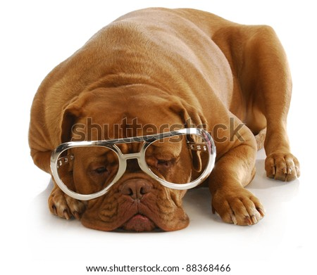 smart dog - dogue de bordeaux wearing large glasses