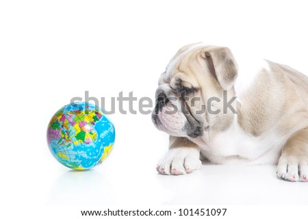 Smart english bulldog puppy with a toy globe isolated - stock photo