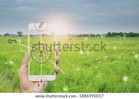smart farmer holding smartphone,rice fields production control,concept agricultural product control technology,to agriculture future trading world market,track productivity,satellite for Agriculture