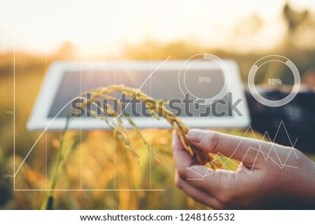 Smart farming Agricultural technology and organic agriculture Woman using the research tablet and studying the development of rice varieties in rice field #1248165532