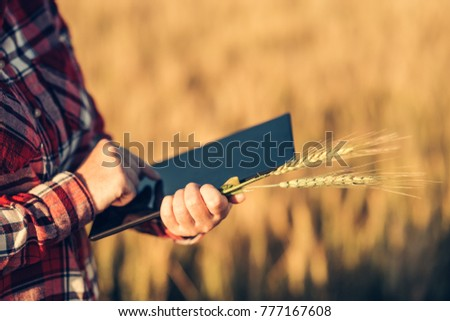 Smart farming, using modern technologies in agriculture. Female agronomist farmer with digital tablet computer in wheat field using apps and internet in agricultural production and crop protection