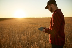 Smart farming using modern technologies in agriculture. Man agronomist farmer with digital tablet computer in wheat field using apps and internet, selective focus. Male holds ears of wheat in hand.