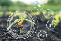 Smart farming with IoT,Growing corn seedling with infographics. Smart farming and precision agriculture 4.0
